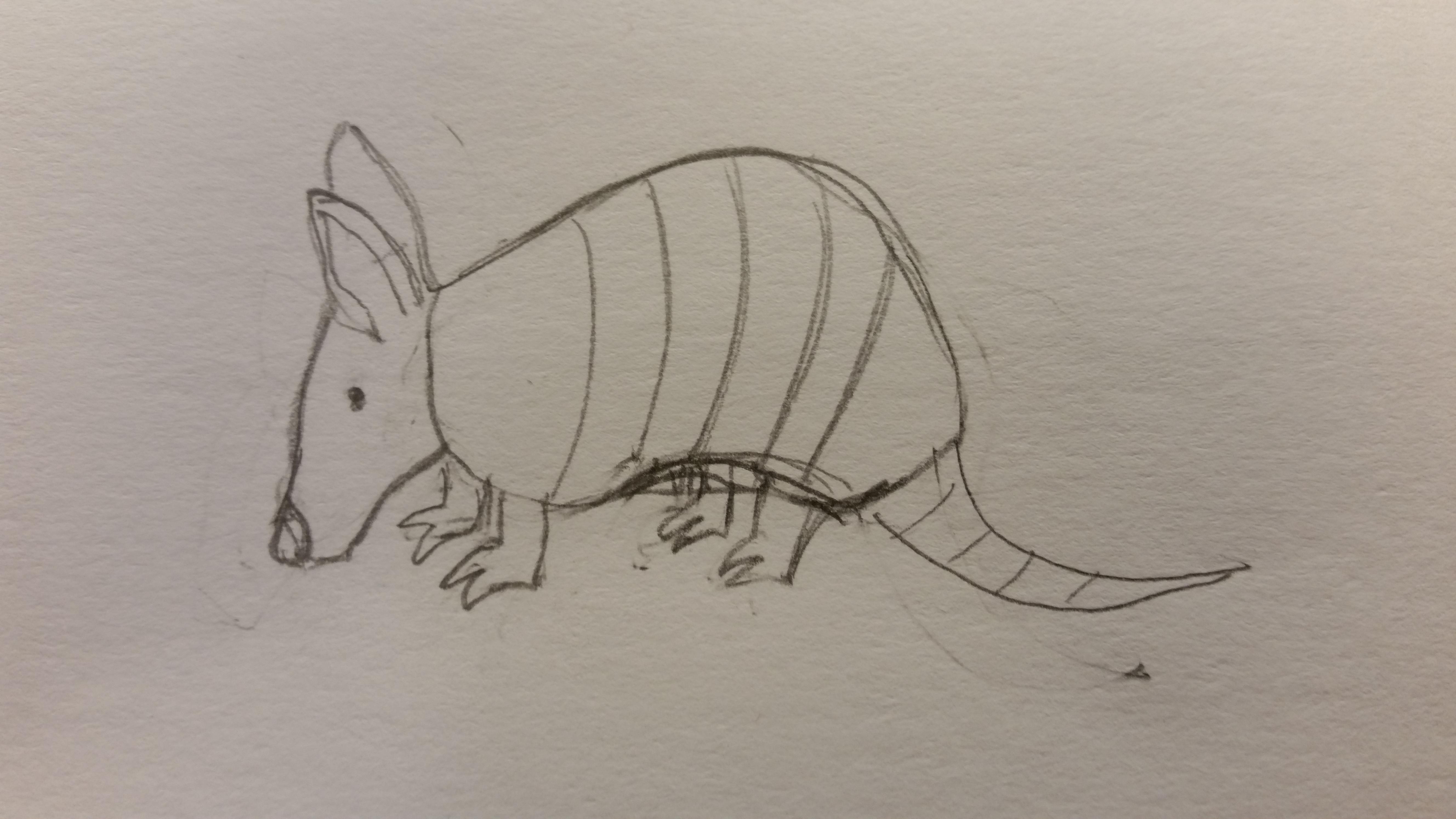 armadillo sketch